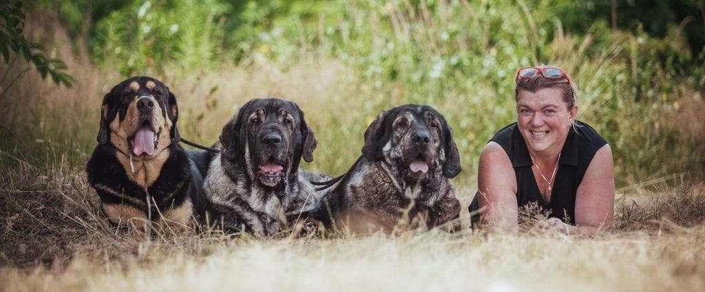Dogs De Oro Mastines